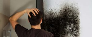orlando mold damage cleanup